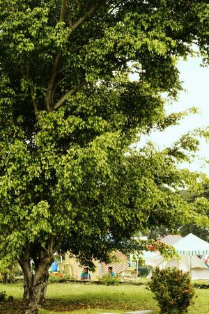 Tree Growth Nature Outdoors Green Color Day Beauty In Nature Grass Treeoflife Greentree Outdoor Photography Backgrounds Fresh Air... Eyeem Market Eyeem Philppines Eeyemnature Eeyem Nature Lover
