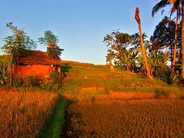 Bali Ubud Balinese Life Sunset Home EyeEm Nature Lover