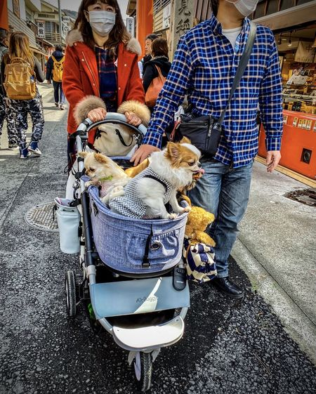 Rear view of people with dog on street