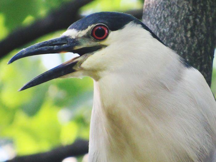 Bird Bird Photography Birds_collection Birds Of EyeEm  One Animal Long Beak Long Beaked Bird Red Eye Red Iris Zoo Animal