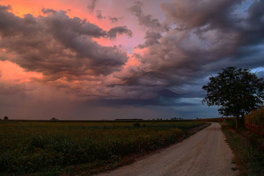The calm before the storm Cloud - Sky Field Nature Sky Beauty In Nature Dramatic Sky Scenics Tranquil Scene Agriculture Rural Scene Sunset The Way Forward Landscape Growth Tranquility Storm Cloud Tree No People Outdoors Grass