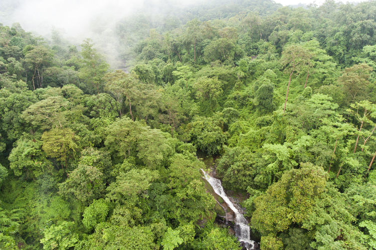 Aerial top view green forest for background Tree Plant Forest Green Color Foliage Lush Foliage Land Environment Nature Beauty In Nature No People Scenics - Nature Day Growth Tranquility Landscape Non-urban Scene WoodLand Tranquil Scene High Angle View Outdoors Rainforest Evergreen Tree Pine Tree Tropical Rainforest