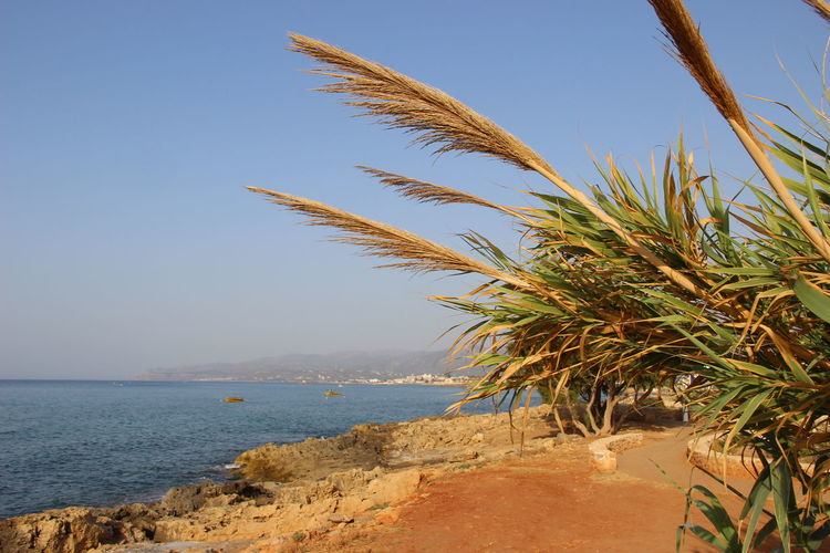 Crete Greece Crete Stalis Crete Island Beach Beauty In Nature Blue Clear Sky Creteisland Day Horizon Over Water Nature No People Outdoors Palm Tree Sand Scenics Sea Sky Tranquil Scene Tranquility Water
