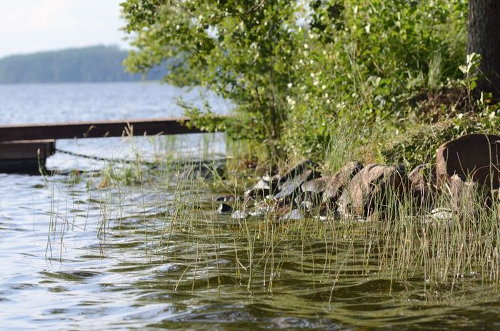 Waterscape Water Reflections Summertime Waterscape Relaxing Taking Photos Summer Romantic Lakeside Finnland