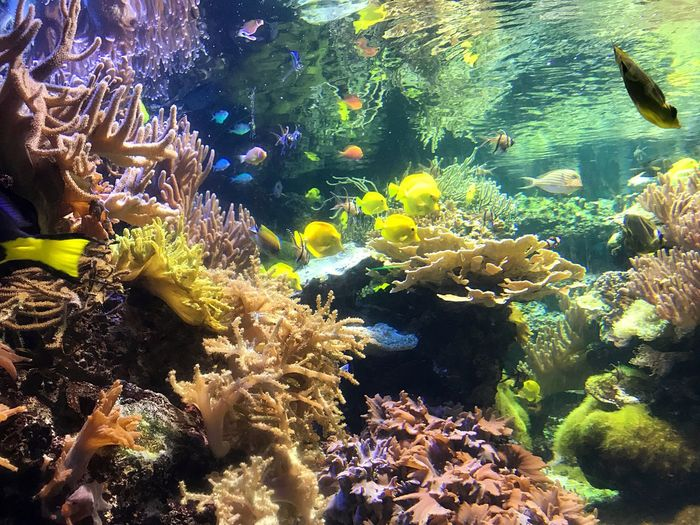 National aquarium, Baltimore. Underwater Fish Sea Life Water Animal Themes Large Group Of Animals Animals In The Wild UnderSea Coral Sea Nature Swimming Beauty In Nature Animal Wildlife No People Clown Fish Aquarium Day Sea Anemone Outdoors National Aquarium Baltimore Maryland Nature UnderSea