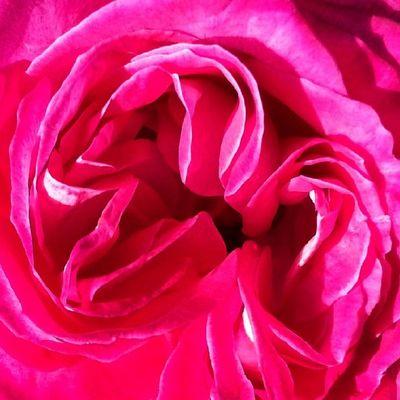 Amb un dia una mica emboirat posem-li color... Molt Bon diaaaa! Floralstylesgf_pink_001 Floralstylesgf Floral_perfection Floral_lover floralstyles_gf