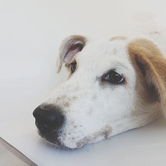 EyeEm Selects Dog Dogs Of EyeEm Dog Lover