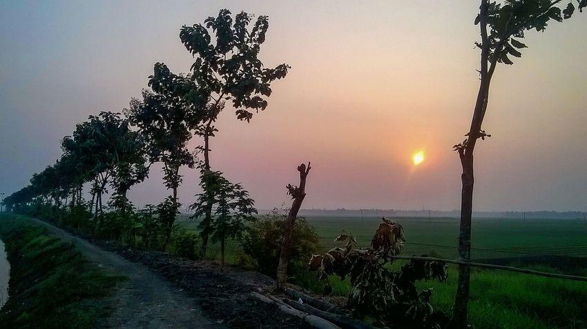 Sunset Sunlight Landscape Mobilephotography Sunset Nature Beauty In Nature Scenics