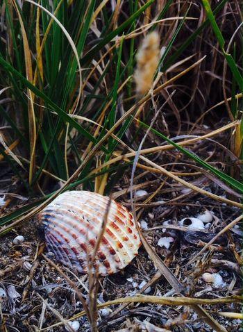 Pechinas Y Caracolas EyeEm Nature Lover AMPt - Lost
