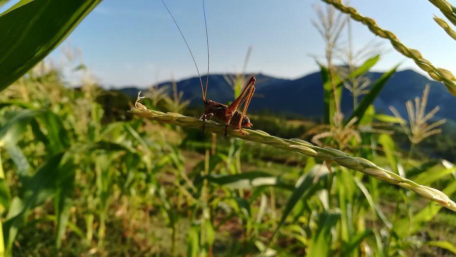 Nature Ponzone Monferrato Aleramo Altomonferrato ERRO Valleerro Nelleterredeldrago Hills Piedmont Italy Photooftheday Insect Animal Themes Plant