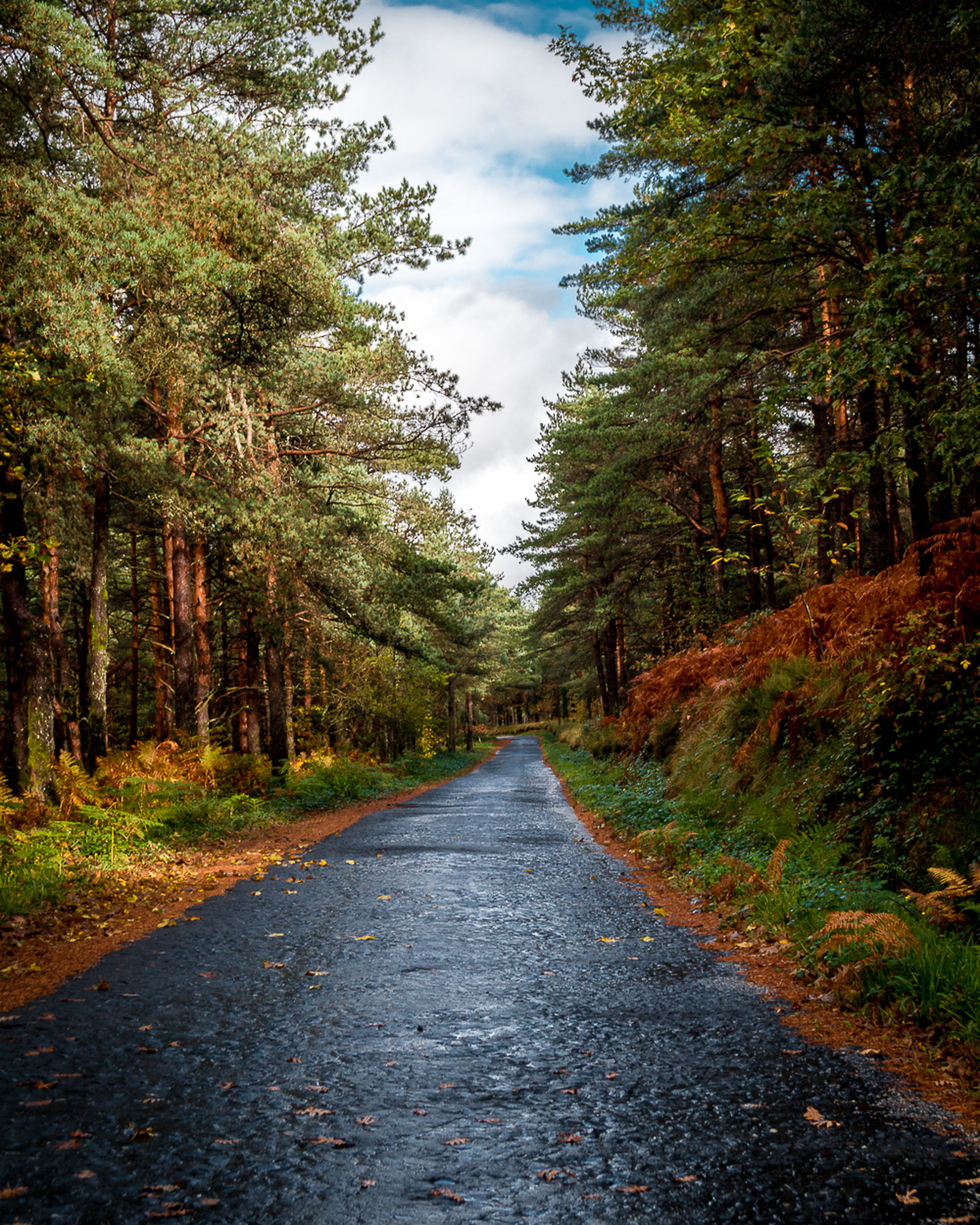 tree, plant, road, the way forward, direction, transportation, forest, nature, no people, land, growth, day, tranquility, diminishing perspective, sky, non-urban scene, tranquil scene, beauty in nature, dirt, scenics - nature, outdoors, change, woodland, treelined