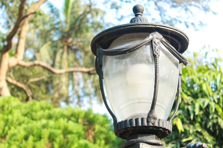 park stand light Focus On Foreground Lighting Equipment Day Metal No People Plant Tree Close-up Nature Low Angle View Hanging Outdoors Light Electric Lamp Technology Light Bulb Electric Light Growth Electricity  Oil Lamp Silver Colored Park STAND