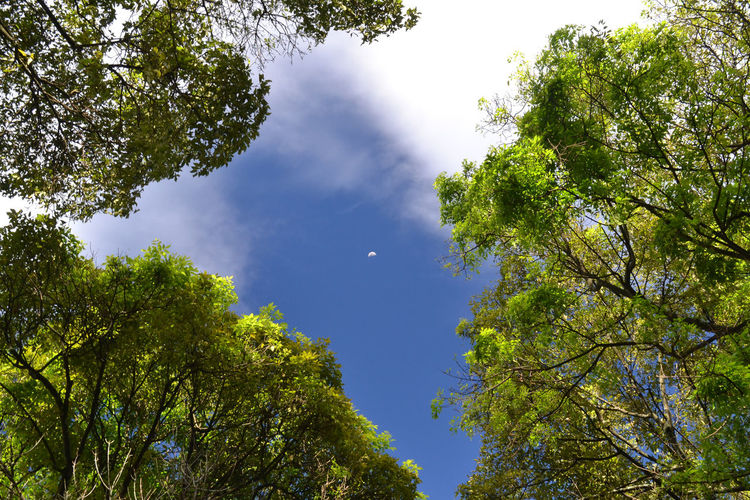 Bogotá Colombia Colors EyeEm Best Shots EyeEm Best Shots - Landscape EyeEm Nature Lover Moon Moon Shots Beauty In Nature Branch Colombia ♥  Day Forest Green Color Growth Leaf Low Angle View Moon_collection Nature No People Outdoors Scenics Sky Tranquility Tree