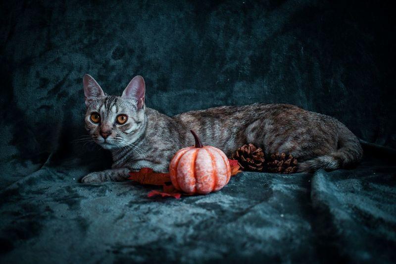 Portrait of cat on blanket