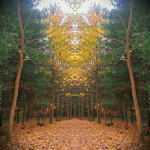 Ohio mirrored. #igersohio Path Mirrored Igersohio P4c12 Jj_forum_0442 Jj_forum_0497