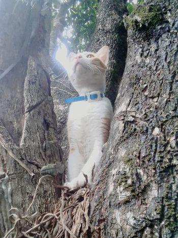 Cutie:)) My Funny Cat Naughty Cat Pet Photography  Pet Lover EyeEm Cats EyeEm Cute Cats Cute Cats Cute Pets Tree Wondering