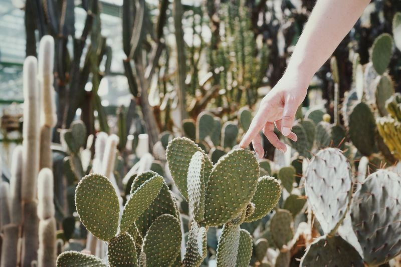 Cropped Hand Touching Cactus On Field