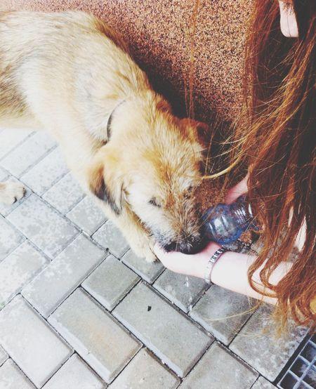 A very sweet dog :)