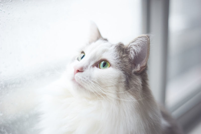 Portrait of a cat looking up
