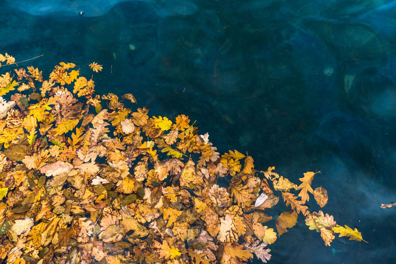 Autumn Beauty In Nature Lake Leaf Leaves Nature Reggia Di Caserta Water Yellow