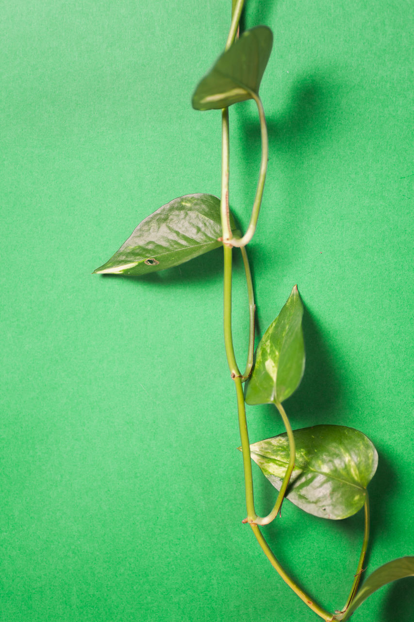 HIGH ANGLE VIEW OF GREEN LEAF