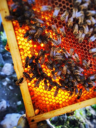 Beehive Food And Drink Insect Outdoors Honeycomb Bee APIculture Large Group Of Animals No People Day Food Nature Animals In The Wild Animal Themes Close-up Healthy Eating Freshness