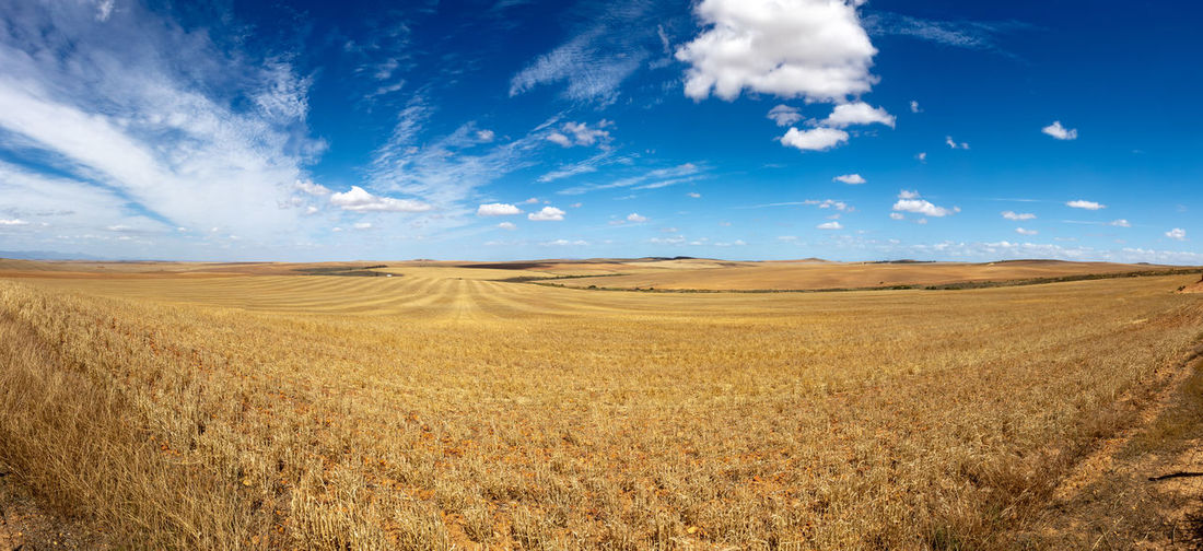 Wheat field on the route 62 near oudtshoorn, south africa