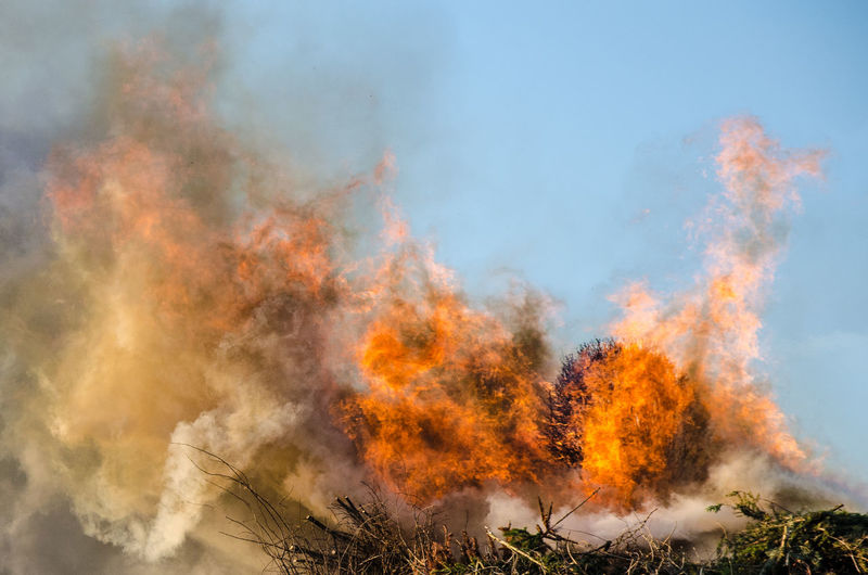 Fire Power In Nature Hexenfeuer Light Hot Outdoors Tree