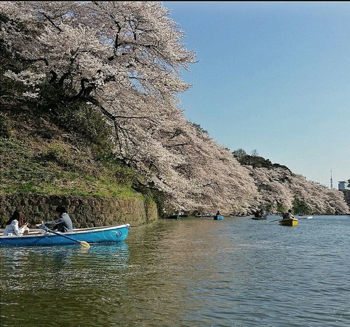 Boating Sakura 樱花 Cherry Blossoms Imperial Palace Moat Chidorigafuchi Spring 2015 Tokyo Japan Travel Photography