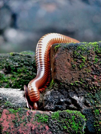 Close-up of millipede on rock
