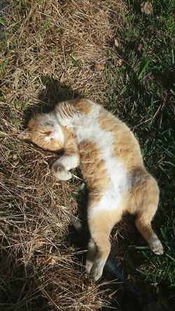 Nicooo 🐈 Cat The Best Animals Kittens Kitties Love Nature Garden Morning Sun Waking Up Perfect Moment Cutie Lovely Home Waking Up From A Nap