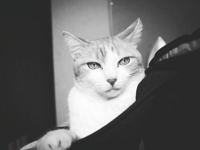 Cat♡ Catlover Mysweetbaby First Eyeem Photo