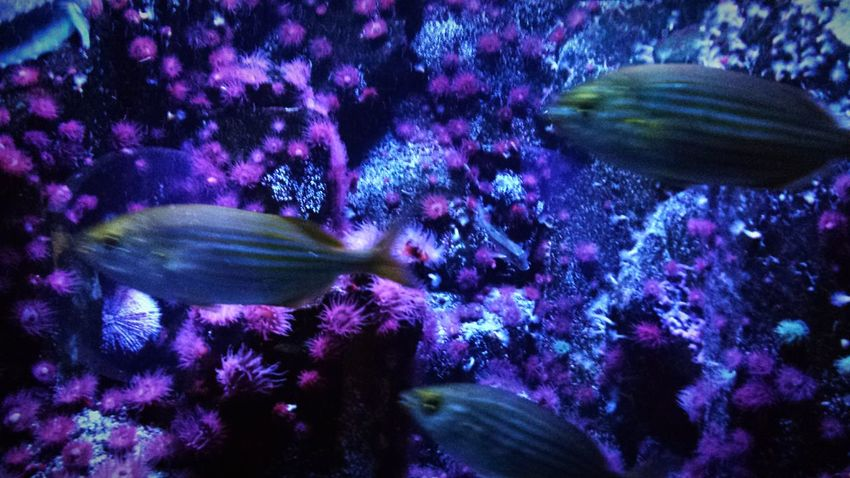 Animal Themes Sea Life Swimming Underwater No People UnderSea Nature Aquarium Beauty In Nature Night Water Close-up Fishes