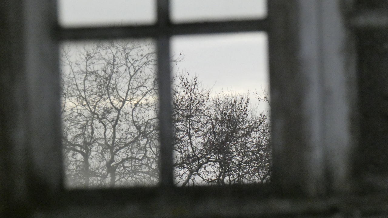 window, bare tree, no people, day, tree, indoors, nature, landscape, cold temperature, beauty in nature, close-up, sky