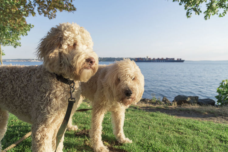 Two dogs outdoors in summer