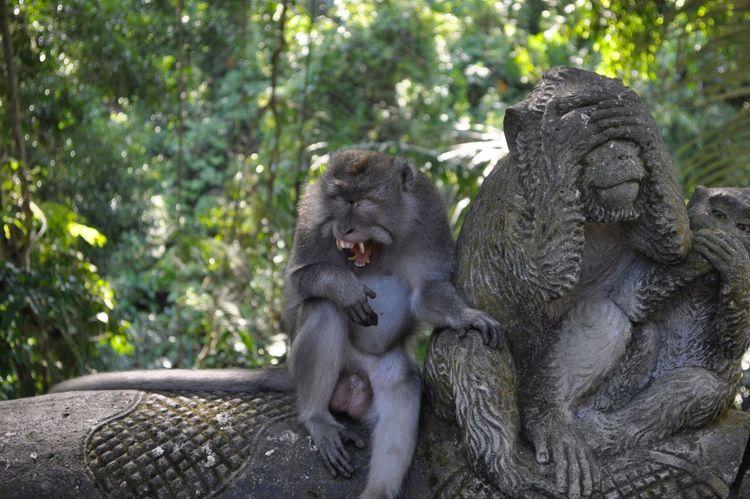 @Monkey Forest, Ubud Bali Nikon D90 Monkey