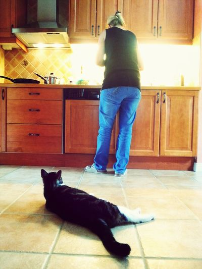 My cat is waiting for dinner! Relaxing Cat Hanging Out Kitchen