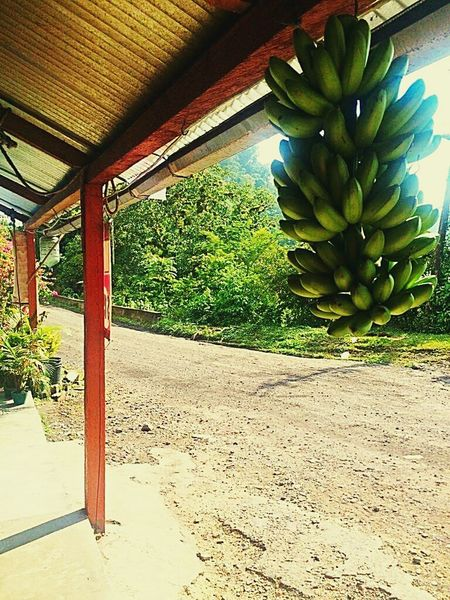 Bananas OurWayOfLife Paradise On Earth