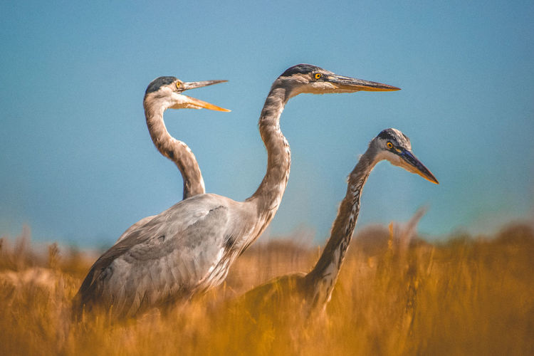 The Week On EyeEm Nature Beauty Sea Animal Wildlife Animals In The Wild Outdoors Three Crane Heron Yellow Blue Trio Simple Clean Day The Week On EyeEm Editor's Picks Fresh On Market 2017