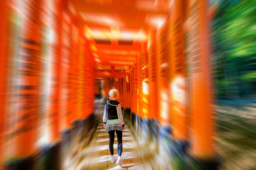 Kyoto, Japan - April 28, 2017: tourist woman walking under red torii gates of famous landmark Fushimi Inari shrine. Travel asia concept. Kyoto's popular landmark. Kyoto, Japan - April 28, 2017: Fushimi Inari Taisha is the most important Shinto shrine famous for its thousands of red torii gates.The lettering engraved on pole are the name of donated organizations Fushimi Fushimi Inari Taisha Fushimi Inari Taisha Shrine Gates Japan Photography Kyoto, Japan Shinto Shrine Shinto Temple TORII Torii Gate Tourist Tourist Attraction  Woman Adult Architecture Blurred Motion Building Business Full Length Fushimi Inari Kyoto Fushimi Inari Shrine Indoors  Japan Culture Kyoto Kyoto Japan Kyoto,japan Kyotojapan Males  Men Motion Occupation on the move One Person Orange Color Real People Rear View Selective Focus Shinto Of Japan Shintoism Torii Gate Japan Walking Working