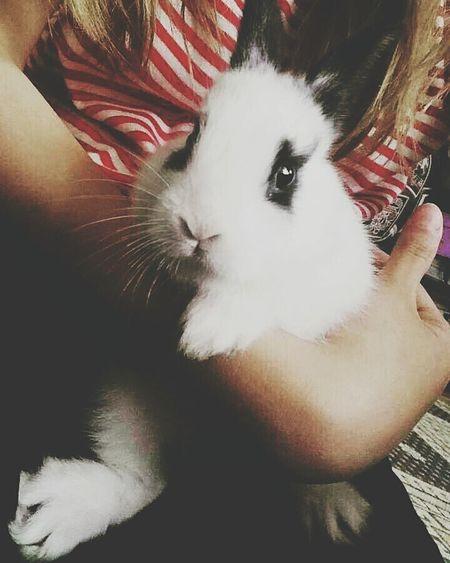 Rabbit 🐇 Love ♥ Komur Lovely Rabbit Friends Helpful Beautiful Lifeisgood Hi! Love Like Heartful Perfect Smiles Happy Lovelovelove Enjoying Life Today ♥ Sweetday♡ Sweetanimal