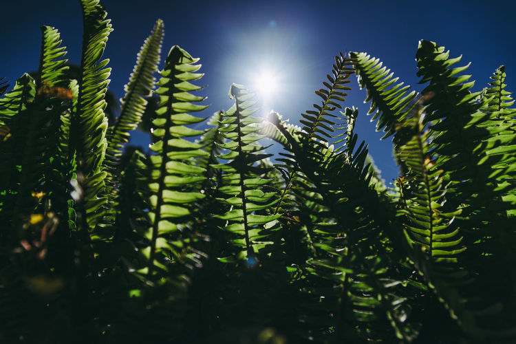 Low angle view of fern amidst trees against sky