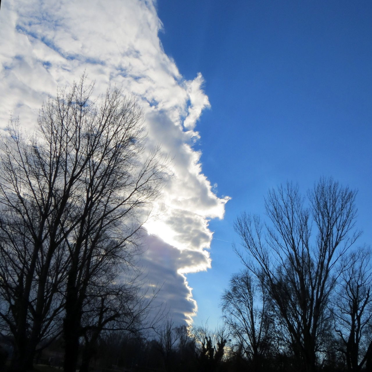 tree, bare tree, sky, low angle view, nature, beauty in nature, tranquility, outdoors, scenics, tranquil scene, no people, branch, silhouette, cloud - sky, day, blue, vapor trail