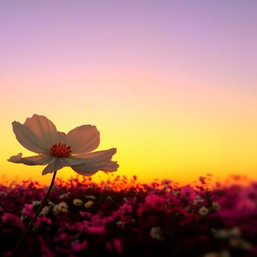 Sky Collection Blue Sky Sunset Flower Collection Colors Of Autumn Autumnsky Beautiful Flowers Sunset_collection
