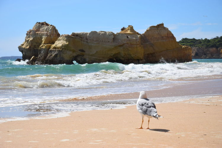 View of seagull on rock at beach