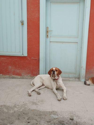 Pets Dog Door Sitting Animal Themes