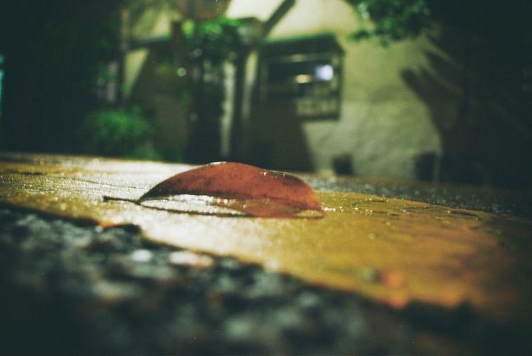 雨後的一角。 臺灣 Taiwan Rainy Days Rain Leaf 🍂 Light Stuffy Story LINE Roadside Conner Picture Photoshop VSCO EyeEm End