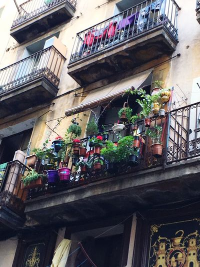Check This Out Plants Plants And Flowers Balcony Balconies Nature In The City Flowerpots Little Garden El Raval El Raval Barcelona