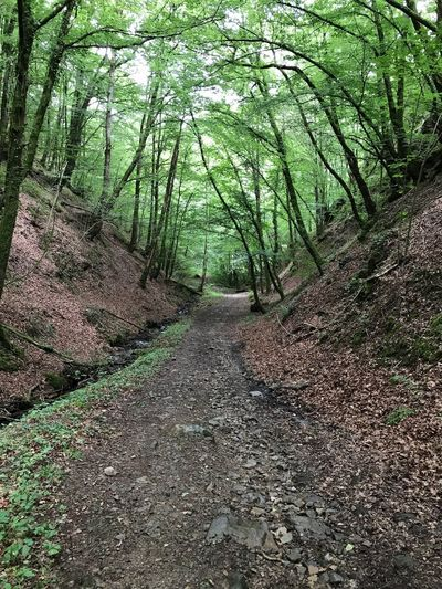 Forest The Way Forward Tree Nature Tranquility Beauty In Nature Tranquil Scene Footpath Tree Trunk Non-urban Scene Scenics Outdoors Day Landscape Growth No People Walkway Travel Destinations