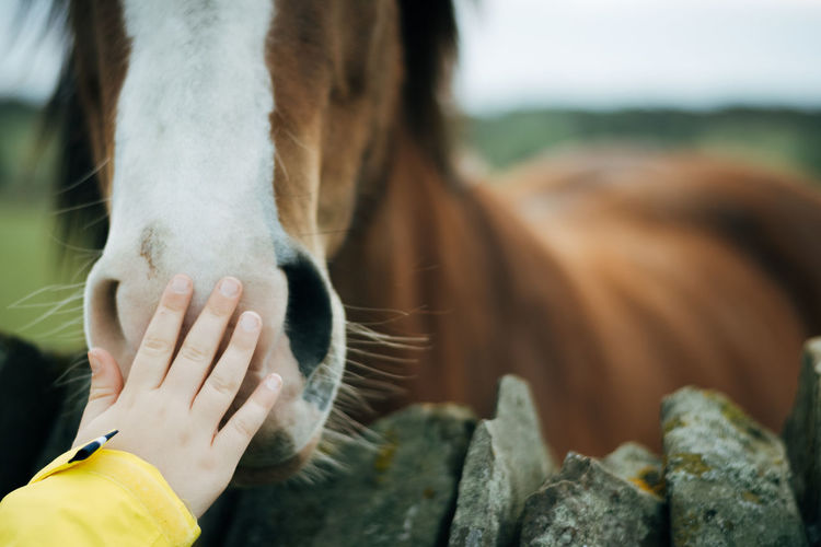 Cropped hand of child touching horse snout at farm